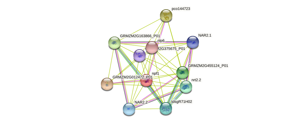 GRMZM2G086496_P01 protein (Zea mays) - STRING interaction network