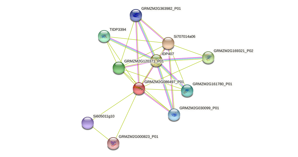 GRMZM2G086497_P01 protein (Zea mays) - STRING interaction network