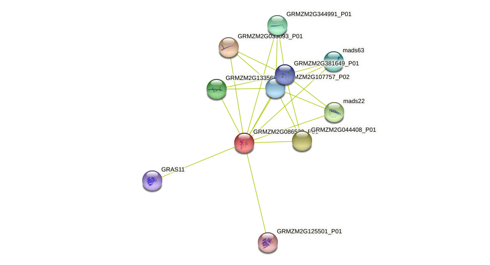 GRMZM2G086530_P01 protein (Zea mays) - STRING interaction network