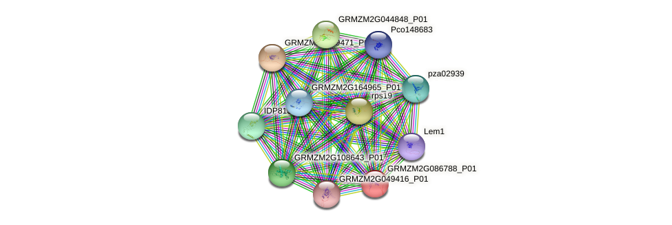 GRMZM2G086788_P01 protein (Zea mays) - STRING interaction network