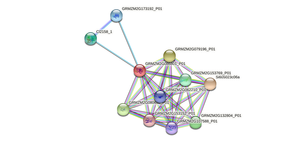 pco066126 protein (Zea mays) - STRING interaction network