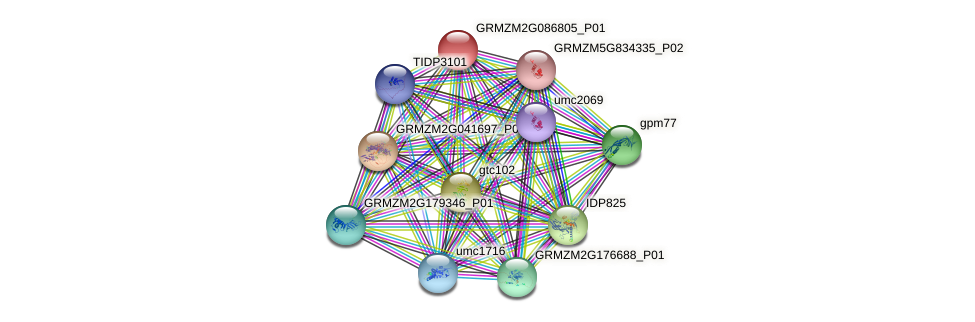 GRMZM2G086805_P01 protein (Zea mays) - STRING interaction network
