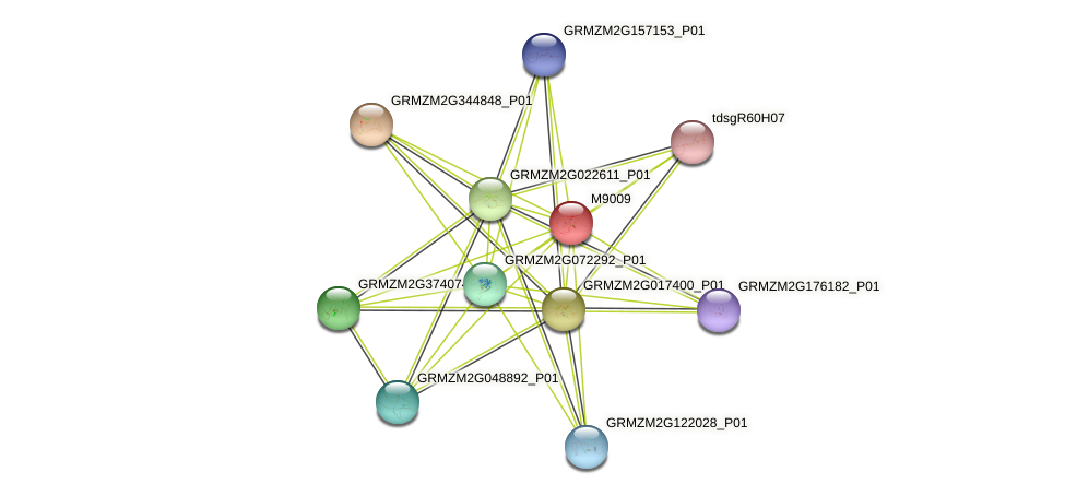 GRMZM2G086856_P01 protein (Zea mays) - STRING interaction network