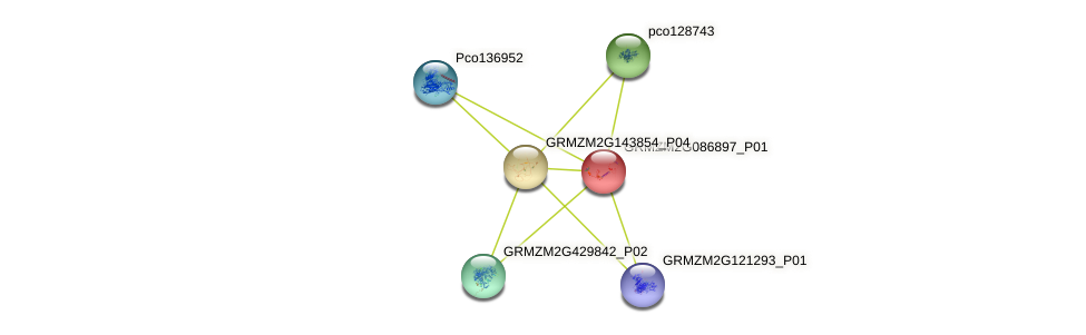 100304200 protein (Zea mays) - STRING interaction network