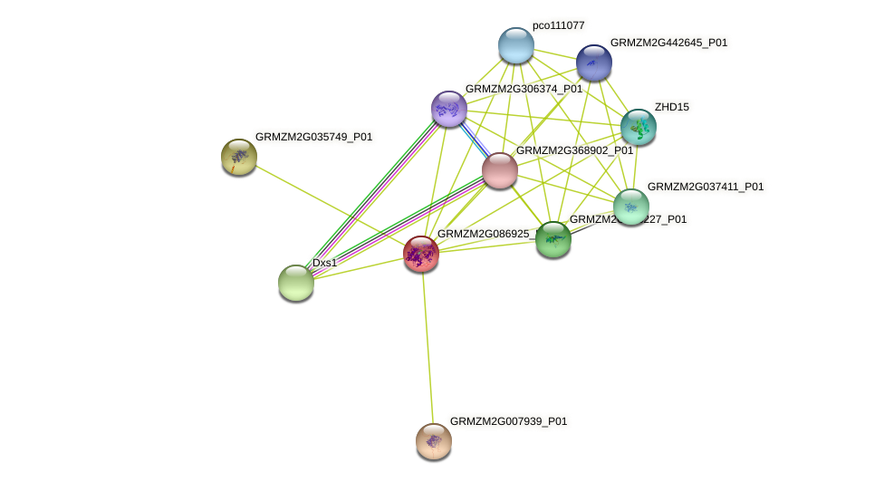 GRMZM2G086925_P01 protein (Zea mays) - STRING interaction network