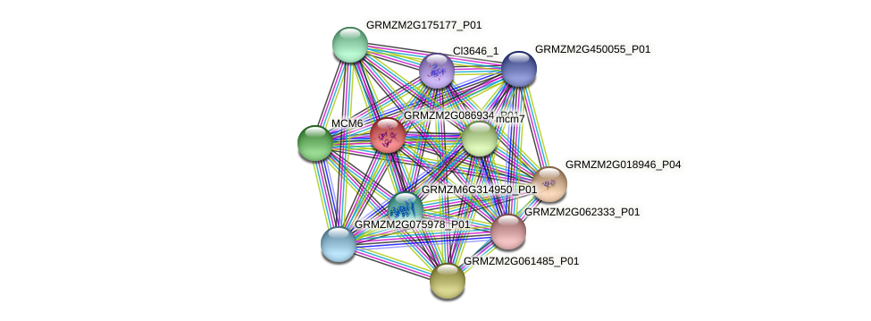 rfa1 protein (Zea mays) - STRING interaction network