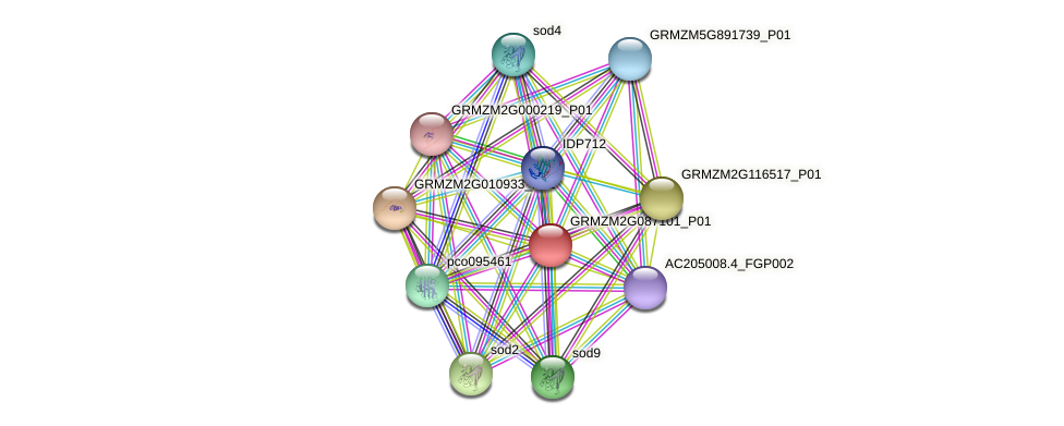 GRMZM2G087101_P01 protein (Zea mays) - STRING interaction network