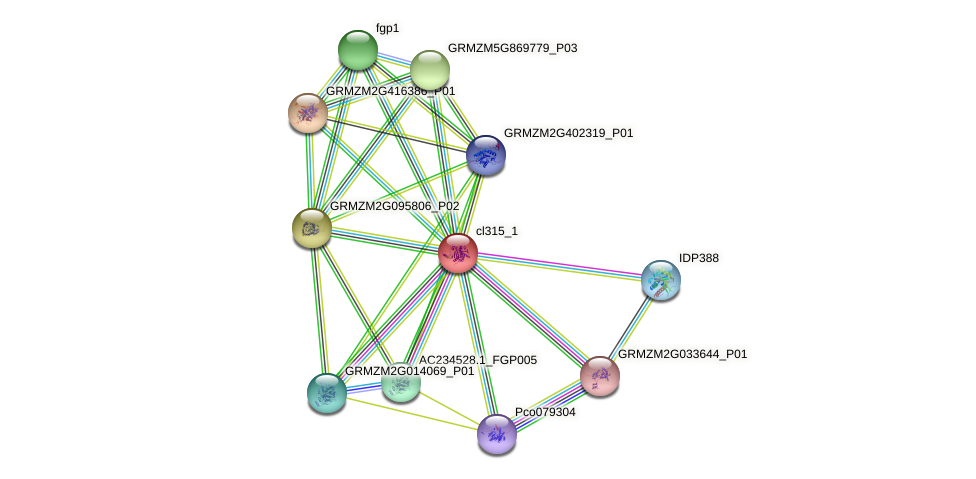 cl315_1 protein (Zea mays) - STRING interaction network