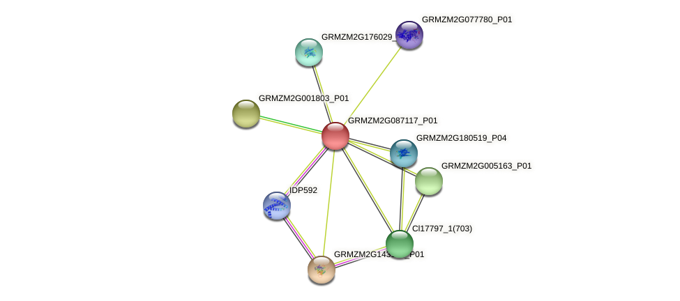 GRMZM2G087117_P01 protein (Zea mays) - STRING interaction network