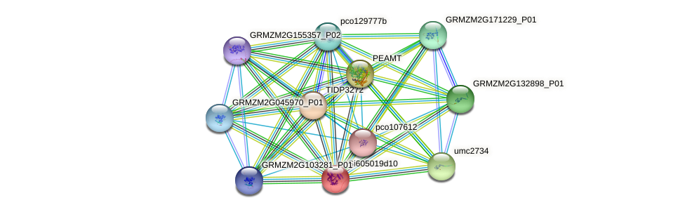 GRMZM2G087146_P03 protein (Zea mays) - STRING interaction network