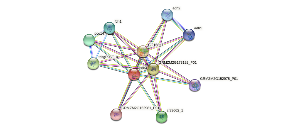 PDC3 protein (Zea mays) - STRING interaction network
