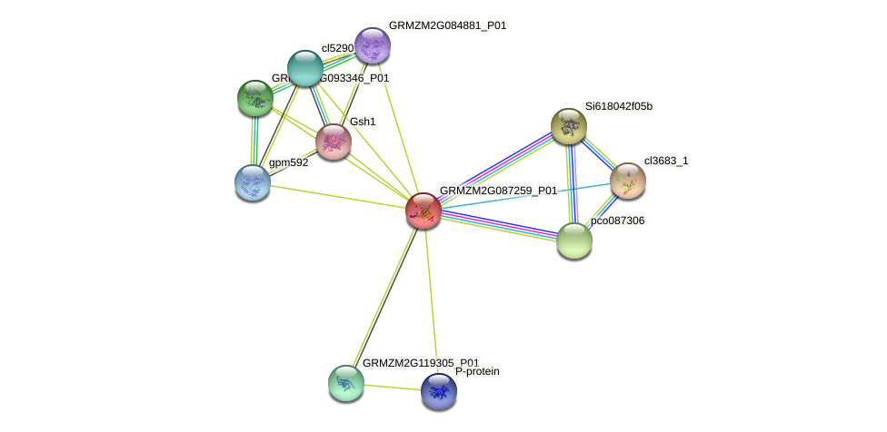 GRMZM2G087259_P01 protein (Zea mays) - STRING interaction network