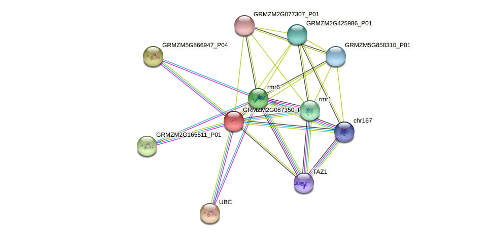 GRMZM2G087350_P01 protein (Zea mays) - STRING interaction network