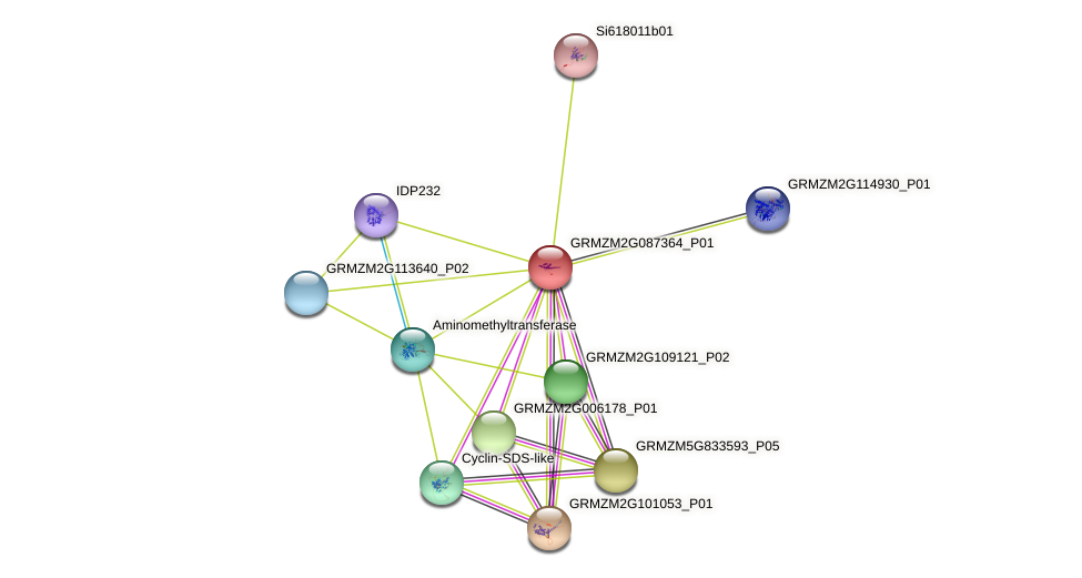 GRMZM2G087364_P01 protein (Zea mays) - STRING interaction network