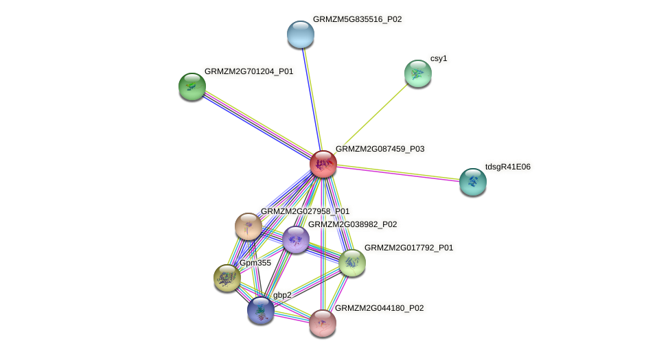 Zm.12080 protein (Zea mays) - STRING interaction network