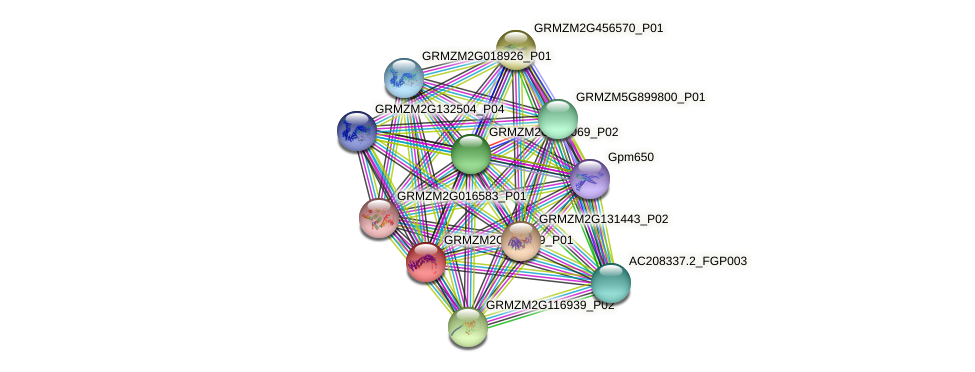 GRMZM2G087619_P01 protein (Zea mays) - STRING interaction network