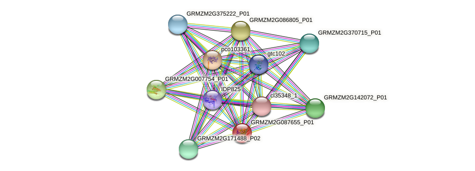 GRMZM2G087655_P01 protein (Zea mays) - STRING interaction network