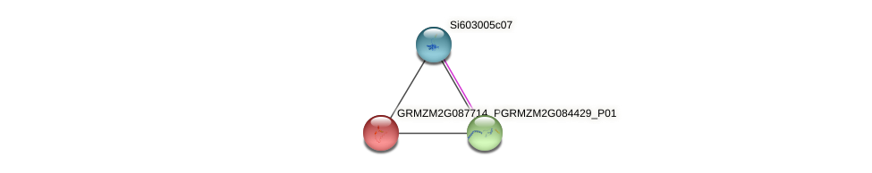 Zm.23253 protein (Zea mays) - STRING interaction network