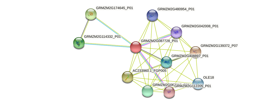 GRMZM2G087728_P01 protein (Zea mays) - STRING interaction network