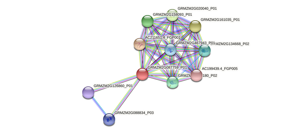 GRMZM2G087759_P01 protein (Zea mays) - STRING interaction network