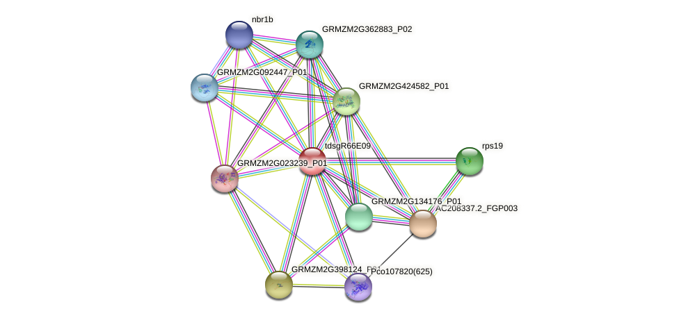 Zm.24252 protein (Zea mays) - STRING interaction network