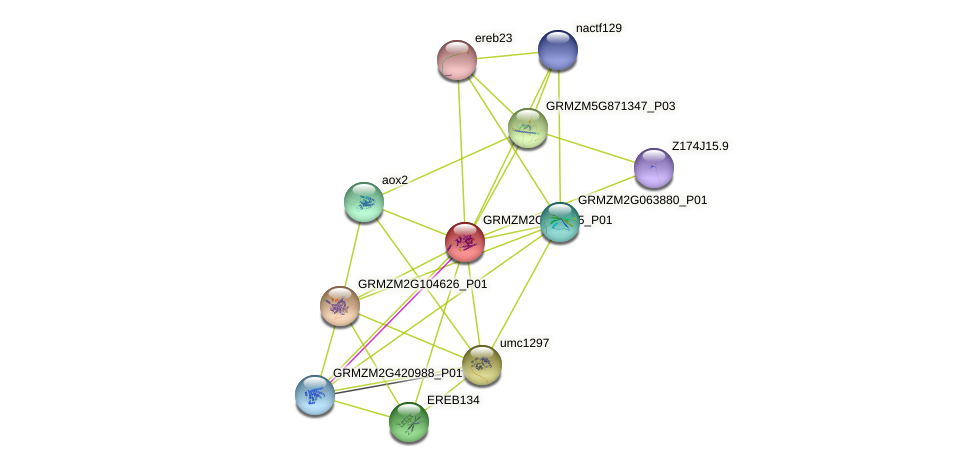 GRMZM2G087875_P01 protein (Zea mays) - STRING interaction network