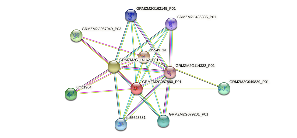 GRMZM2G087880_P01 protein (Zea mays) - STRING interaction network