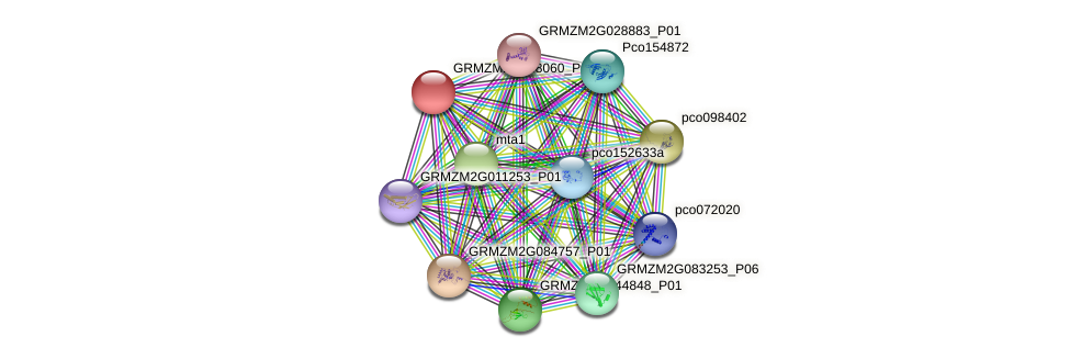 GRMZM2G088060_P01 protein (Zea mays) - STRING interaction network