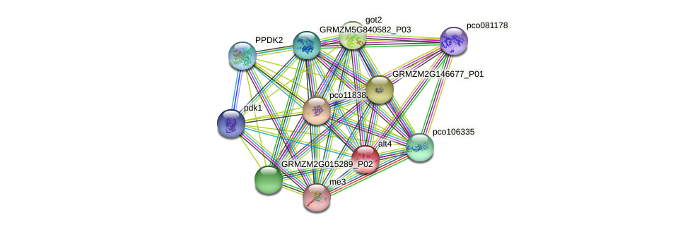 Zm.87285 protein (Zea mays) - STRING interaction network