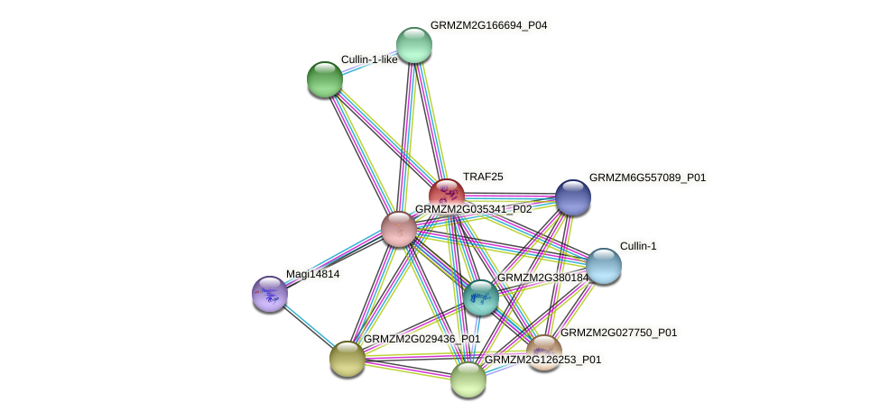 TRAF25 protein (Zea mays) - STRING interaction network