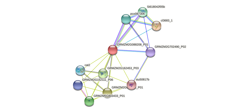 GRMZM2G088208_P01 protein (Zea mays) - STRING interaction network