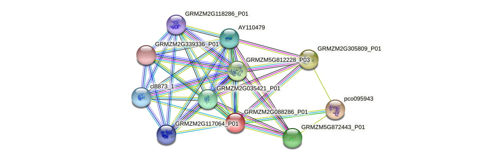 GRMZM2G088286_P01 protein (Zea mays) - STRING interaction network