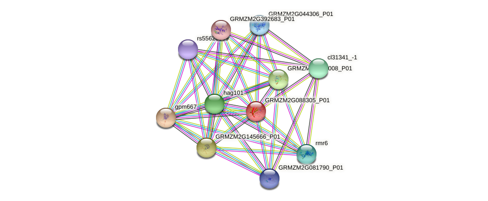 GRMZM2G088305_P01 protein (Zea mays) - STRING interaction network