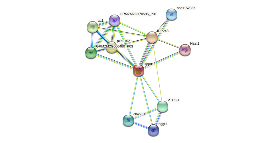 hppd protein (Zea mays) - STRING interaction network