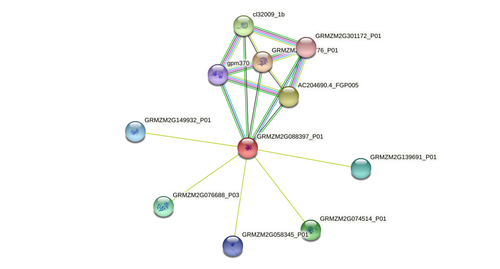 Zm.23302 protein (Zea mays) - STRING interaction network