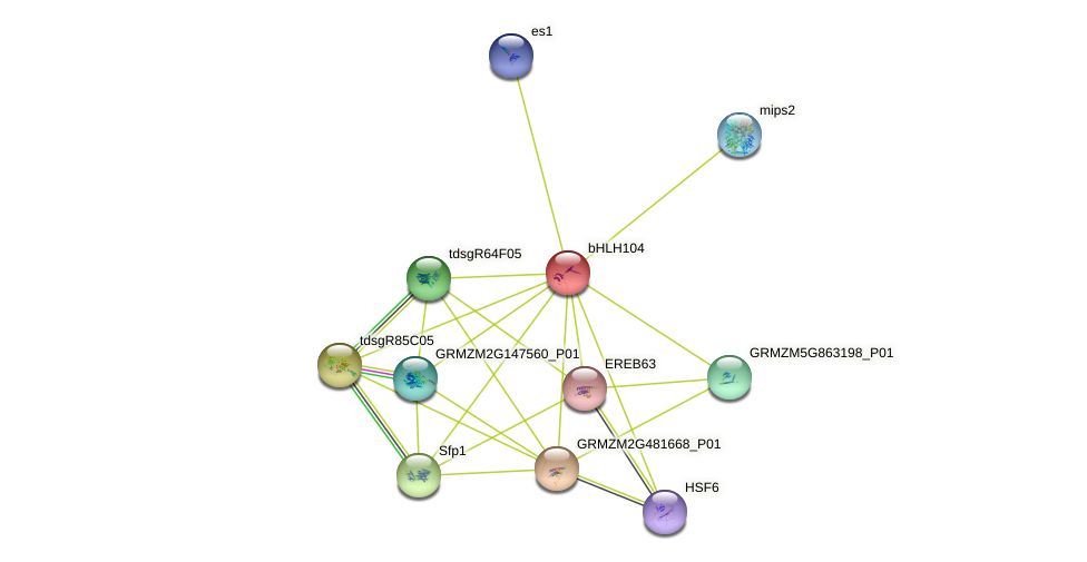 bHLH104 protein (Zea mays) - STRING interaction network