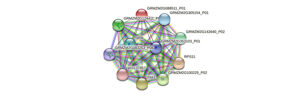 GRMZM2G088511_P01 protein (Zea mays) - STRING interaction network