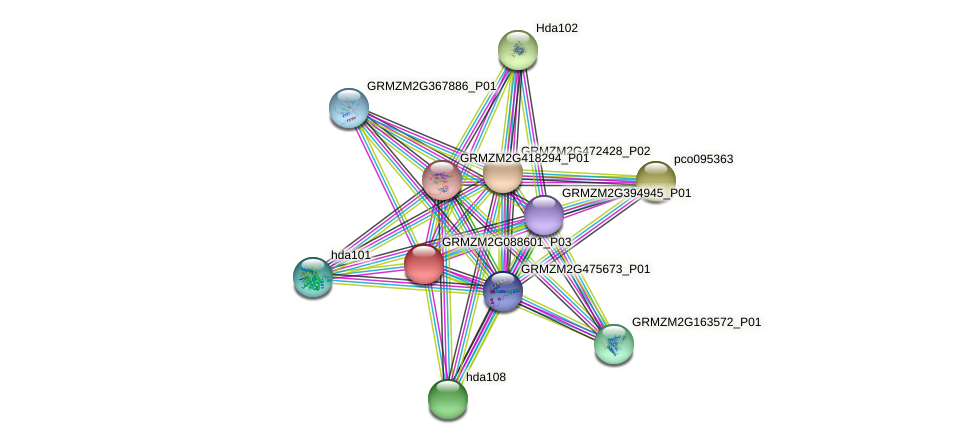 GRMZM2G088601_P03 protein (Zea mays) - STRING interaction network