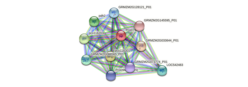 Zm.72688 protein (Zea mays) - STRING interaction network