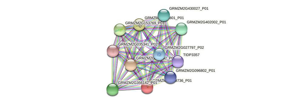 GRMZM2G088736_P01 protein (Zea mays) - STRING interaction network