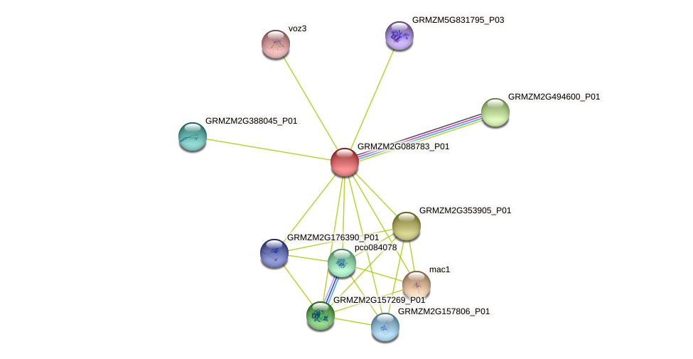 MYB47 protein (Zea mays) - STRING interaction network