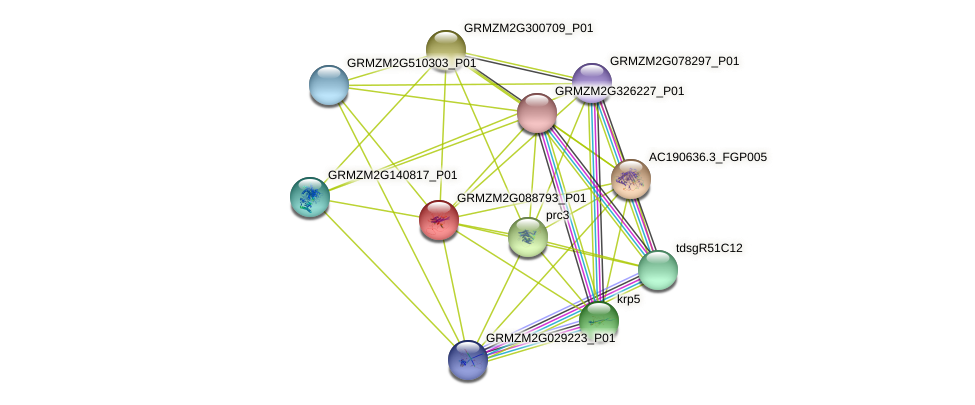 GRMZM2G088793_P01 protein (Zea mays) - STRING interaction network