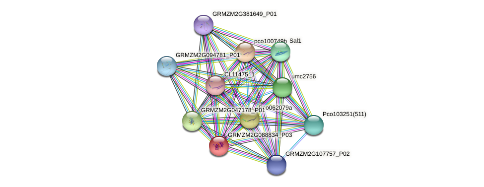 GRMZM2G088834_P03 protein (Zea mays) - STRING interaction network