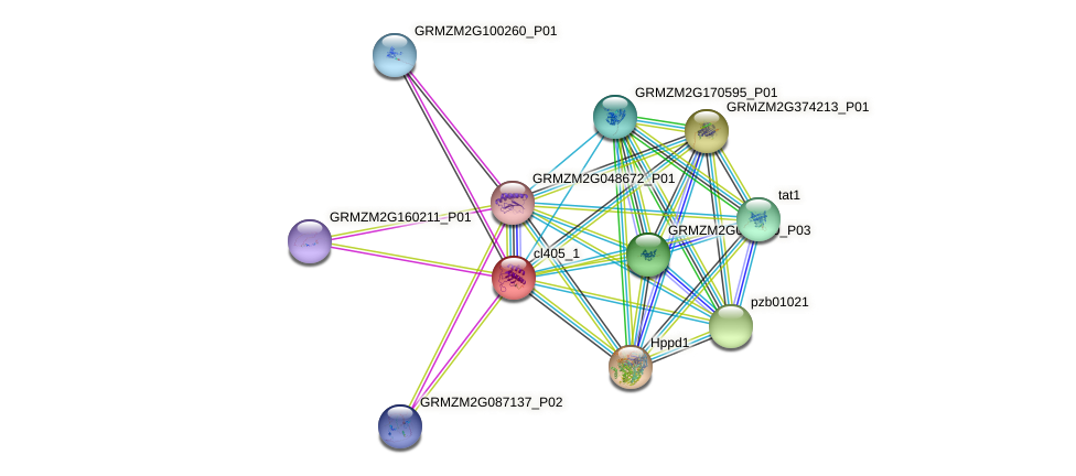 cl405_1 protein (Zea mays) - STRING interaction network