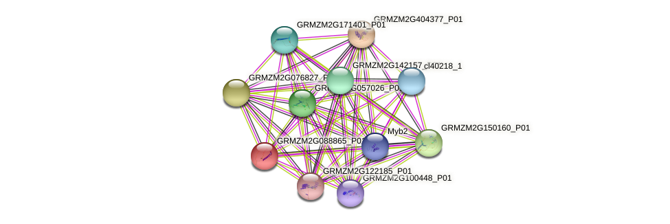 GRMZM2G088865_P01 protein (Zea mays) - STRING interaction network