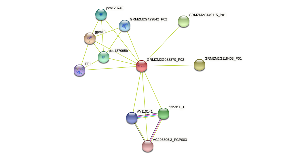 GRMZM2G088870_P02 protein (Zea mays) - STRING interaction network