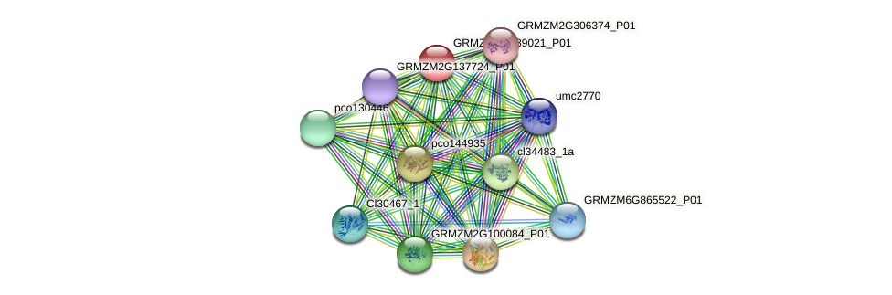 GRMZM2G089021_P01 protein (Zea mays) - STRING interaction network