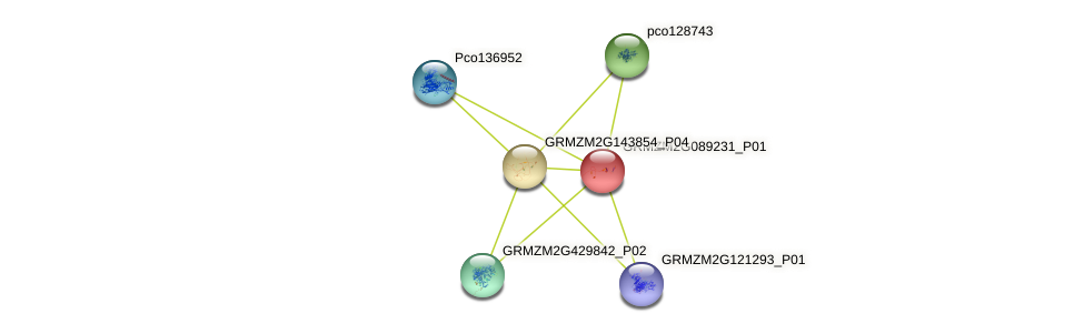 Zm.28319 protein (Zea mays) - STRING interaction network