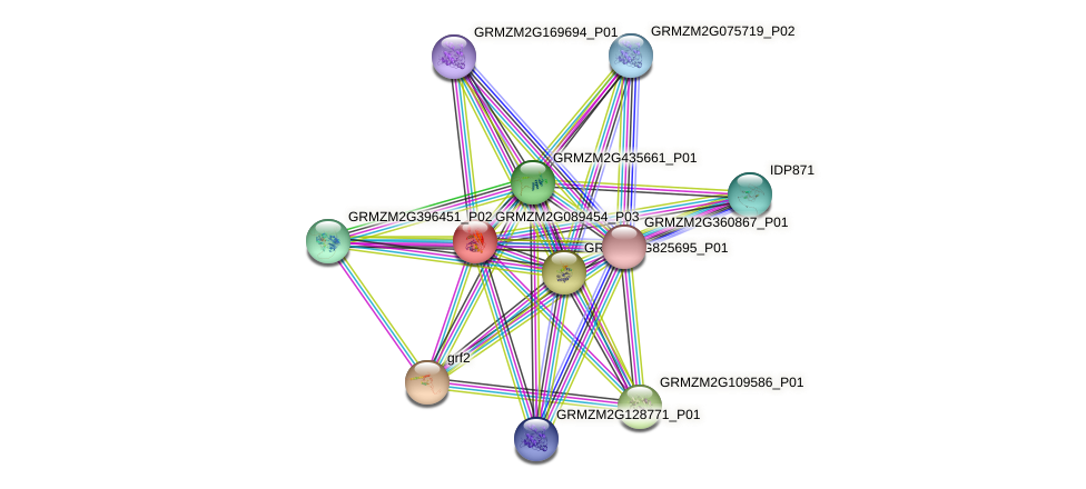 GRMZM2G089454_P03 protein (Zea mays) - STRING interaction network