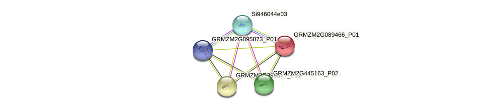 100383634 protein (Zea mays) - STRING interaction network